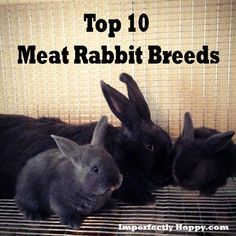top 10 meat rabbits breeds: Rabbits are the one thing I didnt mind to raise and then butcher. Meat Rabbits Breeds, Raising Rabbits For Meat, Raising Farm Animals, Rabbit Breeds, Rabbit Farm, Pet Rabbit, Rabbit Toys, Rabbit Hutches, Mini Farm