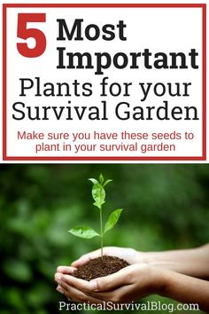 5 most important plants for your survival garden. Make sure you have these seeds to plant in your survival garden.