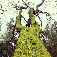 Moss on the boughs like velvet lay