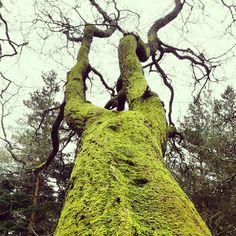 Moss on the boughs like velvet lay