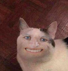 funny cat memes laughing so hard ; funny cat memes so true ; funny cat memes laughing so hard scary Funny Cat Faces, Meme Faces, Funny Cats, Funny Animals, Cute Animals, Weird Cats, Sad Cat, Funny Horses, Cat Memes