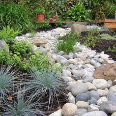 "by Garden Culture Victoria  ""red rock in with river rock....""  ""larger rock 'river' instead of a pebble river""  ""I love the rocks the plants used very pretty and""  ""like the contrast of blue-gray plants against whitish dry river bed.""  ""garden plants - the grass""  ""Blue fescue looks great with rock bed.""  ""rock ""river"" with dark mulch; landscaped, boulder here & there, blue fescue"""