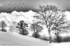 Trees by Giuseppe  Peppoloni, via 500px