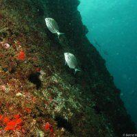 Banyuls sur Mer / Tauchen im Salzwasser / Fotos