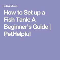 How to Set up a Fish Tank: A Beginner's Guide | PetHelpful