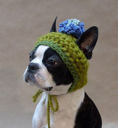 My Boston needs this hat......