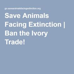 Save Animals Facing Extinction | Ban the Ivory Trade!
