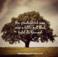 The greatest oak was once a little nut that held its ground #quote #inspiration #motivational