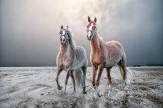 Horses - ARTFreeLife