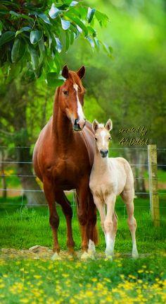 Mare with her foal. Baby Horses, Cute Horses, Pretty Horses, Horse Love, Wild Horses, Beautiful Horses, Animals Beautiful, Horse Pictures, Horse Photos
