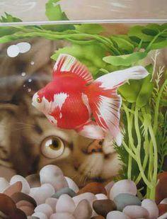 FISHY POINT OF VIEW Makoto Muramatsu