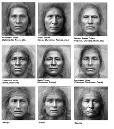 Average Faces of Native American Tribes Average Faces of . - Average Faces of Native American Tribes Average Faces of Native American Tri - Native American Cherokee, Native American Wisdom, Native American Beauty, Native American Tribes, American Indian Art, Native American History, American Indians, American Symbols, British History