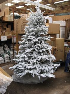 This is what a REAL live flocked Christmas tree looks like ...