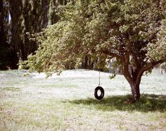 tire tree swing