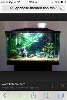 Fish asian tanks themed