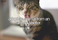 LIFE - || adopt an animal from an animal shelter ||