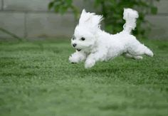 Pic of the day See running #puppy gif