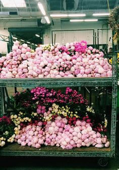 Hundreds of beautiful peonies at San Francisco flower market