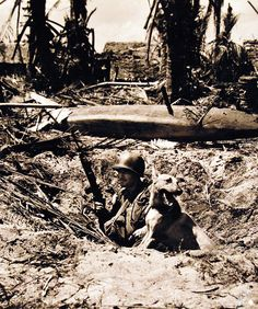Invasion of Leyte, Philippines, 20 October War Dog digs in foxhole on a Philippine beach. Coast Guard photograph, now in the collections of the National Archives. Philippines Beaches, Leyte, War Dogs, National Archives, Coast Guard, World War Ii, Troops, Ww2, Theater