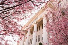 Belmont University~ Nashville, Tennessee