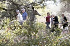 6 things you didn't know about Tohono Chul Park