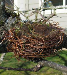 How To Make a Natural-Looking Bird Nest (Full Tutorial), Birds, Butterflies & Garden Crafts (Part 1 Materials Here: http://perpetualplum.wordpress.com/2009/03/12/how-i-make-a-natural-looking-bird-nest-part-1-materials/) (Part 2 Armature Here: http://perpetualplum.wordpress.com/2009/03/12/a-natural-looking-bird-nest-part-2-armature/) (Part 3 Finishing Up Here: http://perpetualplum.wordpress.com/2009/03/13/a-natural-looking-bird-nest-part-3-finishing-up/#)