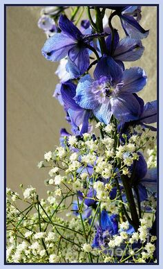 Small blue flowers with baby's breath. Watermark will not appear on your print.