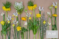 Prachtige seizoensbloemen op een rij. Ken jij alle bloemen? Geel en wit helemaal lente!