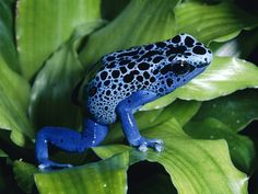 40 Really Amazing Tree Frog Pictures 31