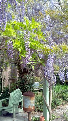 Springtime Wysteria I want this over my shed