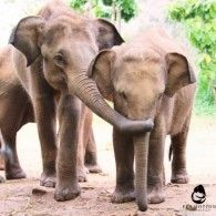 Elemotion Foundation needs your help to install an outdoor video surveillance system for the orphans and staff of the Elephant Transit Home. The Transit Home, located atUdawalawe National Park in southern Sri Lanka,is the only orphanage in the world to rescue, rehabilitate, and release orphaned ...