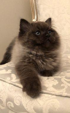 Pretty Animals, Cute Little Animals, Pretty Cats, Cute Funny Animals, Beautiful Cats, Cute Baby Cats, Cute Cats And Kittens, Cool Cats, Kittens Cutest