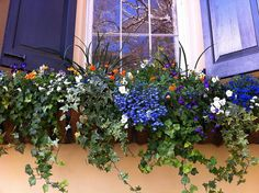 window box flowers ~ so pretty! (not to mention the sweet shutters!)