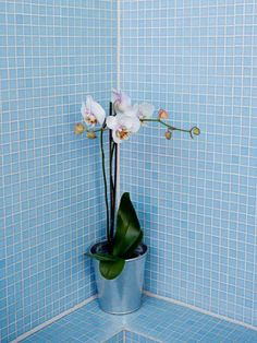 Even if your bathroom has low light, there are plants that will respond well. Try these ideas from The Hungry Gardener, Fabian Capomolla, on for size.