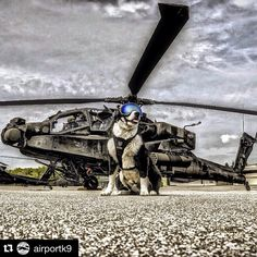#Repost @airportk9 with @repostapp. ・・・ Happy 240th @usarmy!  #airportk9 #airport #airportops #k9 #k9team #k9storm #army #usarmy #military #helicopter #apache #ah64 #rexspecs #rexspecsk9 #muttmuffs #bordercollie #bordercollies #bordercolliesoftheworld #bordercolliesofinstagram #dogstagram #dogsofinstagram #traversecity #tcmi #puremichigan