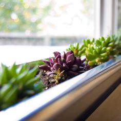 15 Ingenious Home Hacks That Only Cost $50 - Succulent-lined Windowsill