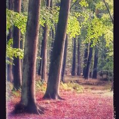 I skovens dybe stille ro <3