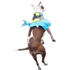 OMG Fetch Batman Cape for Dogs @Brittany Katelyn for Tini!