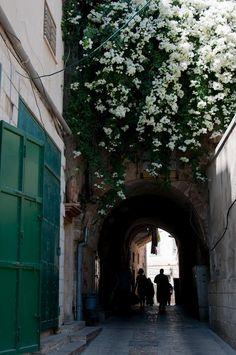 nazareth, old city, bougainvillea