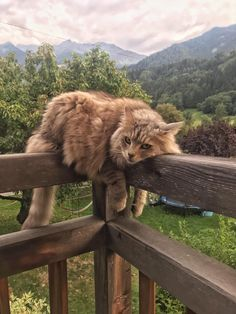 Cute Overload: Internet`s best cute dogs and cute cats are here. Aww pics and adorable animals. Pretty Cats, Beautiful Cats, Cute Cats, Adorable Kittens, Beautiful Pictures, Crazy Cat Lady, Crazy Cats, Animals And Pets, Funny Animals