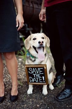 Save the Date Chalkboard Sign Dog by TheLovelyGlassJar on Etsy, $20.00