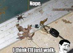 Too bad I have to burn the house down before then... Good lord, I hate spiders so much!