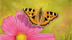 Butterfly [Video Course] | Learn to draw this beautiful Butterfly using Pastel Pencils. Video Course.