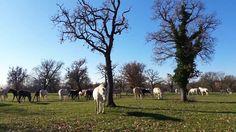 Horses Grazing In Autumnal Country Meadows Filmati e video d'archivio 22796653 - Shutterstock