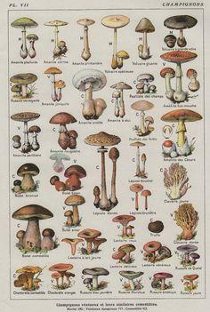 mushroom-chart.jpg 3,000×4,466 pixels #growingmushrooms
