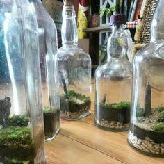 New #terrarium #urbangardening #gardening