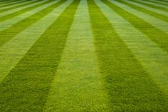 Lawns are a soul-crushing timesuck and most of us would be better off without them