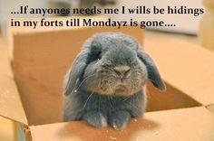 #mondays # bunny