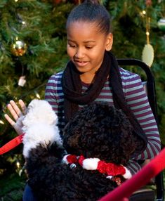 Sasha Obama, daughter of US President Barack Obama, plays with the fsmily dog Bo prior to reading a book to children during a visit to the Children's National Medical Center in Washington, DC, on December 22, 2009. AFP PHOTO / Saul LOEB (Photo credit should read SAUL LOEB/AFP/Getty Images)