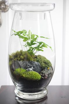 A small terrarium - how awesome is this?! I Love iiiit. Hmm. now to figure out how to grow fungus. . . LoL
